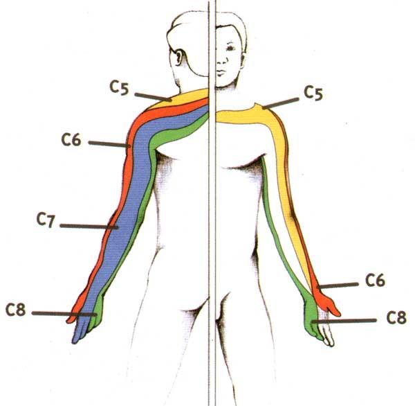 Les vertiges et les syncopes à cervical osteokhondroze